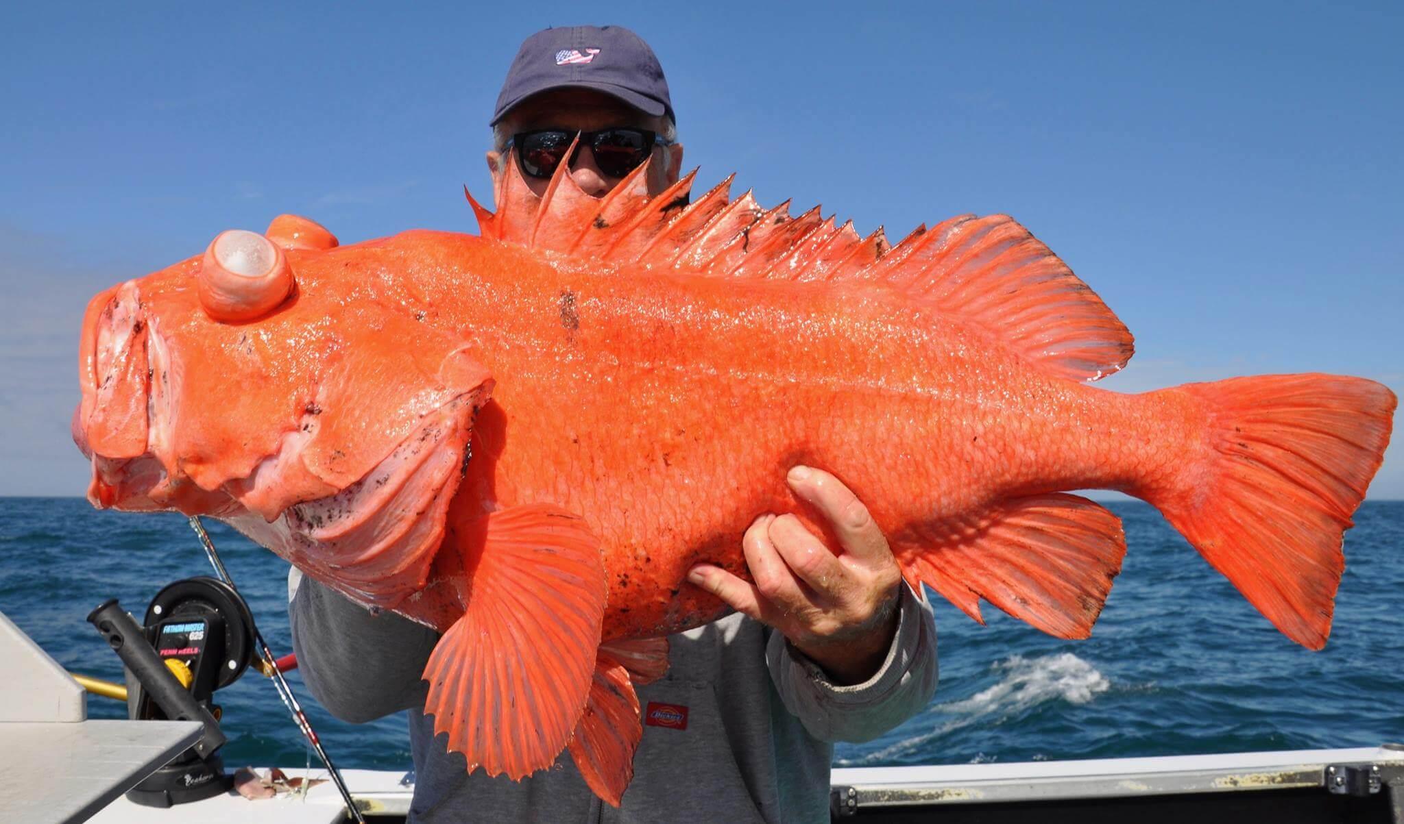 alaska rockfish