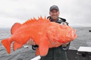 Jake Schaffer 22 lbs. 6-4-16 (1)